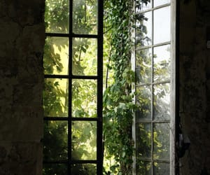 green, window, and home image