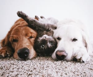 dog, cat, and pet image