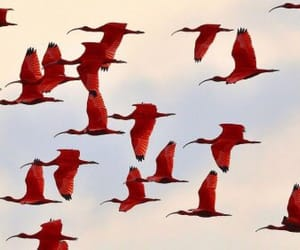 red, bird, and photography image
