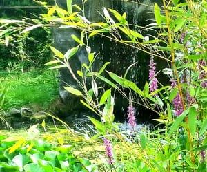 kwiaty, zieleń, and przyroda image