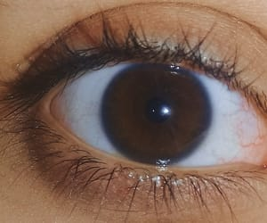 brown, eyelashes, and photography image