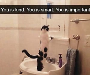 affirmation, cat, and mirror image