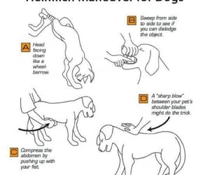 baby, dogs, and save a life image