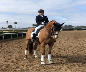 shelley browning dressage image