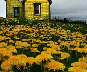 yellow, flowers, and house image
