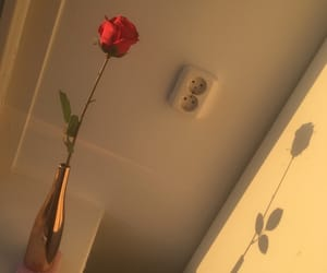 beige, rose, and shadow image