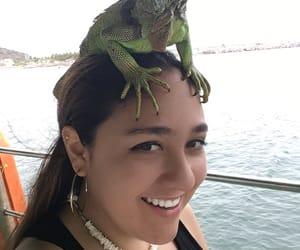 lizard, boat ride, and ocean image