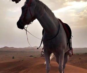 animals, desert, and horse image