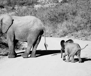 africa, baby elephant, and elephant image