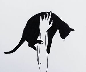 cat, black, and outline image