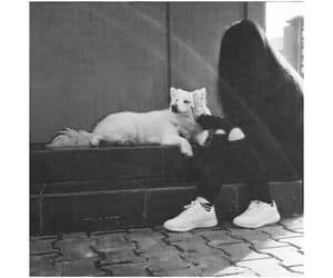 dog, white, and black image