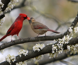 bird and cardinal image