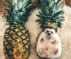 animals, fruit, and photography image