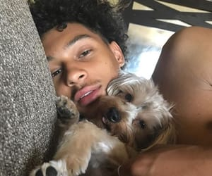 curly hair, dogs, and guys image