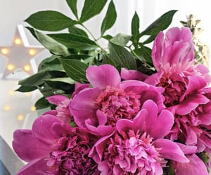 flowers, peonies, and purple image
