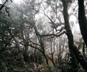 forest, gray, and green image