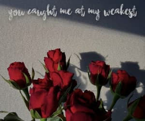 flowers, quotes, and red image