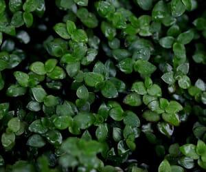 green, natural, and plant image