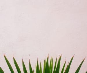green, minimalist, and nature image