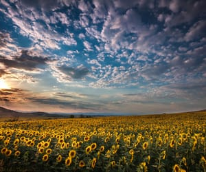 beautiful, summer, and landscape image