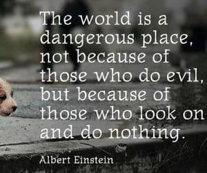 quotes, dog, and Albert Einstein image