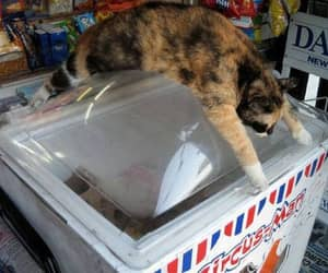 cat, summer, and eis image