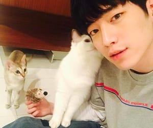 cat and seo kang joon image