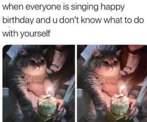awww, birthday, and funny image