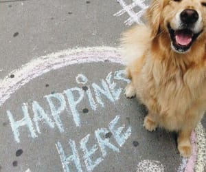 dog, carefree, and happiness image
