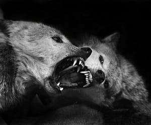 black, fury, and gothic image