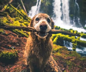 dog, forest, and pet image