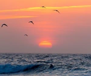 sunset, beach, and birds image