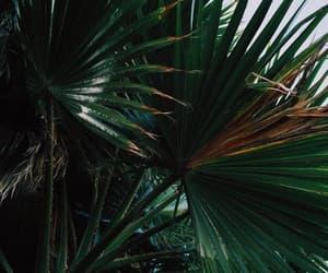 dark, dark tropical, and tropical image