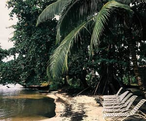 green, dark, and dark tropical image