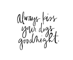 dogs, quote, and text image