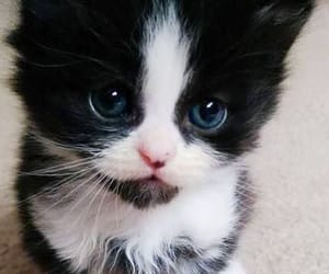 adorable, cat, and fuzzy image