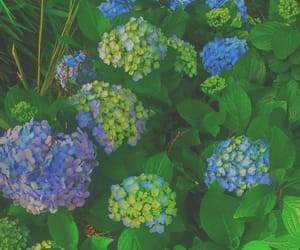 blue, flowers, and gree image