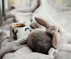 blanket, bunny, and brown image