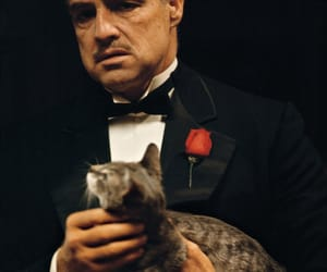 The Godfather, cat, and marlon brando image