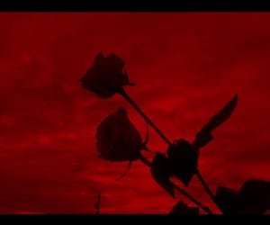 blood red, grunge, and red rose image