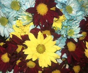 colores, margaritas, and flowers image