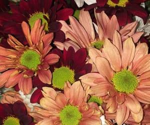 flowers, orange, and 🌺 image
