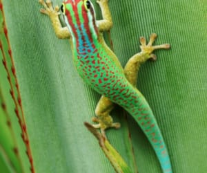 green, reptile, and reunion island image