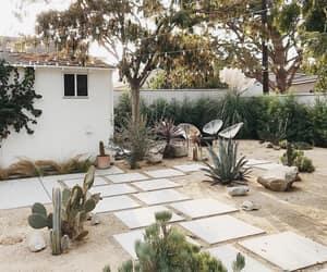 backyard, cacti, and cactus image