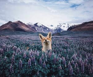 animal, fox, and mountains image