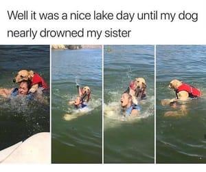 dog, funny, and sister image