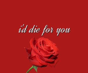 flowers, red, and typography image