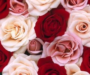 beautiful, photo, and pink image