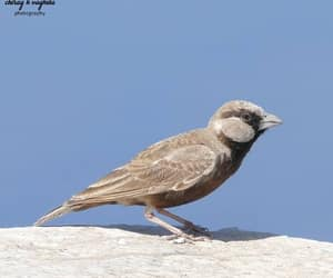 birds, india, and bharat image