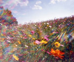 background, flower, and flower field image